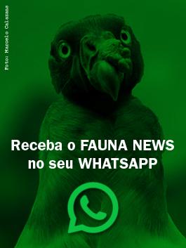 Receba o Fauna News no seu WhatsApp