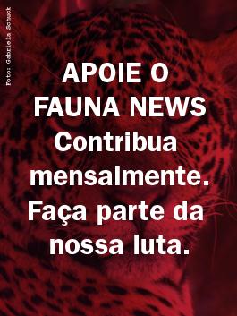 Apoie o Fauna News. Contribua mensalmente. Faça parte da nossa luta.